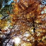 2014年の秋分の日はいつ?意味や日にちが変わるのはなぜ?
