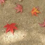 晩秋の候の意味!挨拶の使い方や季語として使う時期はいつまで?