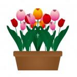 チューリップの開花時期や球根を植える時期はいつ?