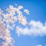 春分の日の意味!お彼岸にお墓参りをする由来や時期はいつまで?