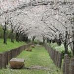 陽春の候の意味や由来!使う時期はいつ?春陽の候との違いは?