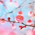 早春の候を使う時期はいつからいつまで?意味や季語の使い方マナーは?