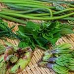 山菜の種類!こごみ、はりぎり、あずきなってどんな特徴?