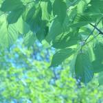 初夏の候の意味!時期はいつ?季語を使った挨拶や結びの例文!