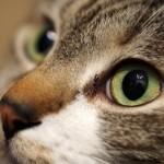 猫にまたたびをあげすぎは危険なのはなぜ?その効果や与え方、量は?