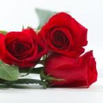 薔薇の本数で伝える意味が違う?日本と中国では花言葉も違う!?