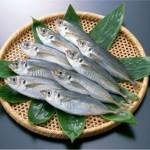 アジの簡単なさばき方!刺身やフライ、煮付けでは?旬な時期と栄養は?