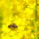 ハチに刺された時に起こる症状!応急処置や対処に使える薬は?