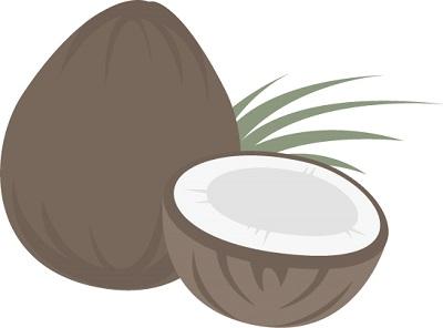 ココナッツミルクのイラスト