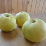 梨の栄養や効能、その効果は?食べ過ぎは下痢になるって本当?