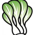 チンゲン菜の栄養を損なわない食べ方は炒め?おひたし?保存期間は?