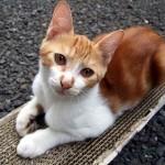 猫の毛やひげ・歯や爪の生え変わり時期や周期はどれくらい?