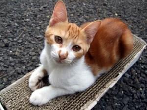 猫の爪とぎ画像