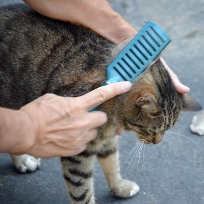 猫のブラッシング画像