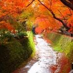 錦秋の候の時期はいつからいつまで?同じ意味の季語や例文は?