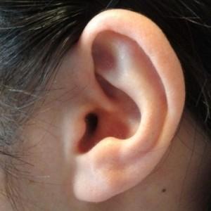 耳たぶの画像