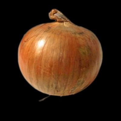 玉ねぎの画像