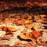 落ち葉は肥料になる?肥料に向いてる植物と堆肥の作り方は?