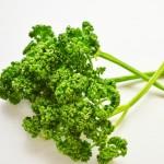 パセリの茎は食べれる?栄養や活用方法、保存の仕方は?