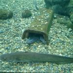 うなぎの卵は海と川どっちにある?産卵時期や卵の数は??