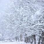 季冬の候の意味や使う時期はいつ?ビジネスでの使い方は?