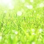 残春の候の意味と使う時期!ビジネスなどでの使い方や例文
