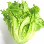 レタスに栄養はない!?含まれてる栄養や効果、カロリーは?
