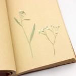 押し花の簡単な作り方!変色を防ぐコツや短時間で作る方法